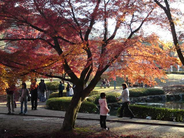 曽木公園で紅葉狩り(行楽/土岐市)