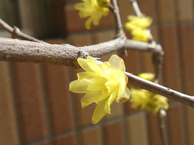 早春バイバイ…(お庭)