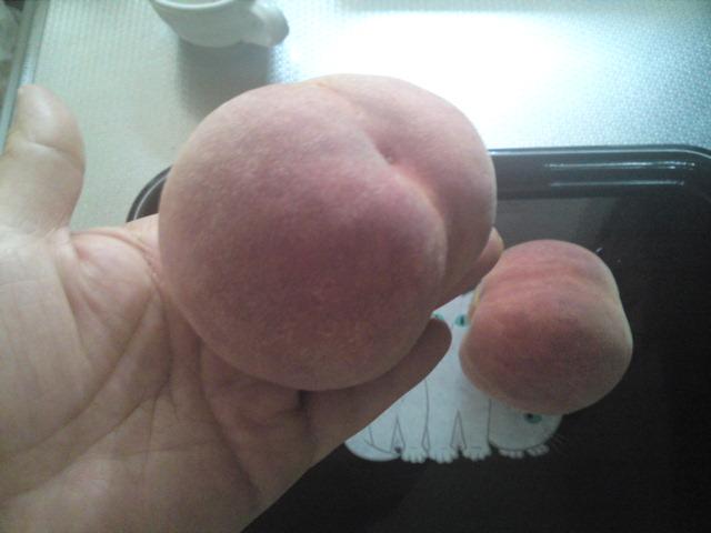同級生が育てた犬山の桃、食べた。