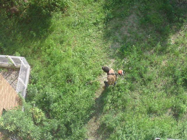 お庭屋ケンちゃん、草刈りナウ。